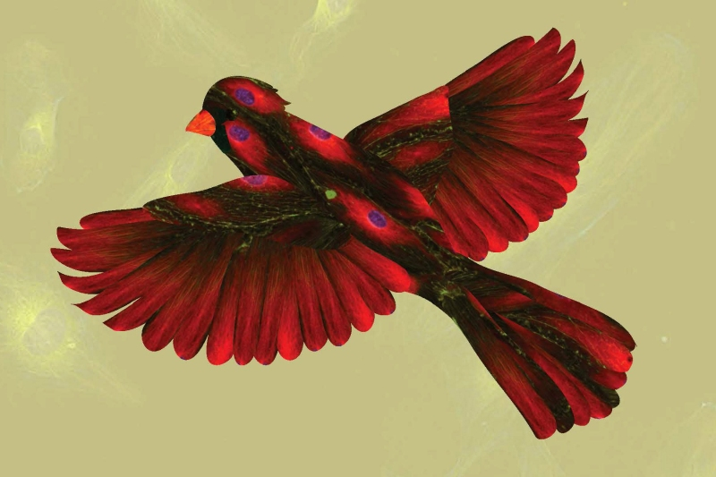 Spring Tree & Cardinals