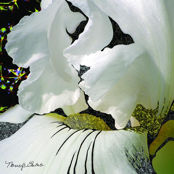 Iris Cell Flower 2014